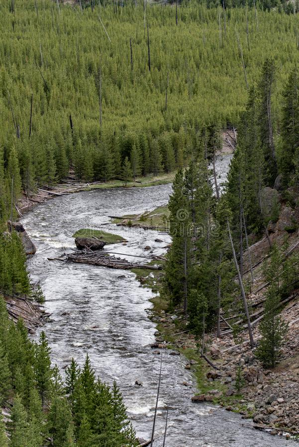 Река через лес в yellowstone стоковое фото