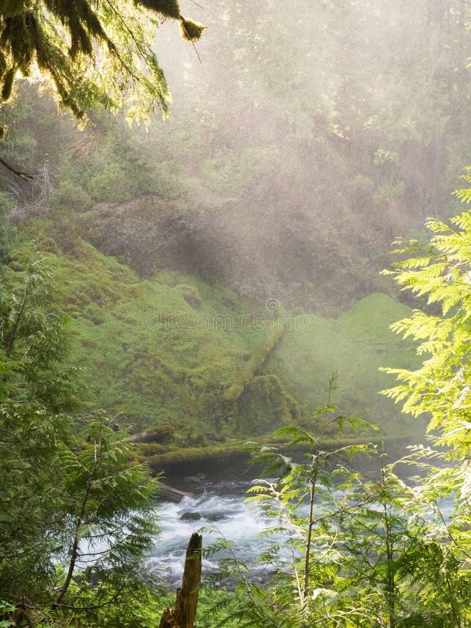 Река через сочный каньон стоковое изображение