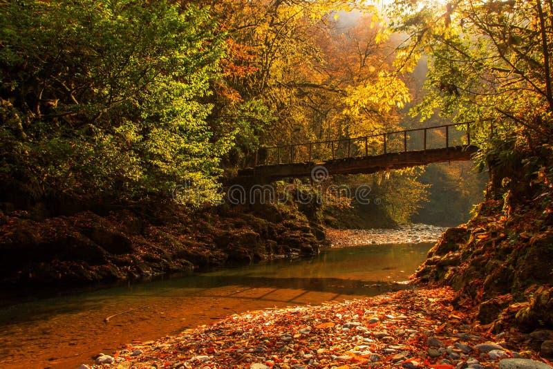 Река Agva стоковая фотография rf