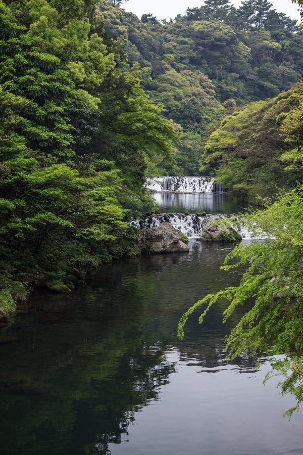 Река Cheonjiyeon и 2 малых каскада стоковое изображение rf