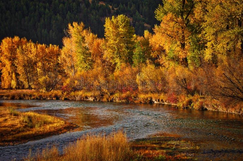 Река Clark Fork западная Монтана стоковые фото
