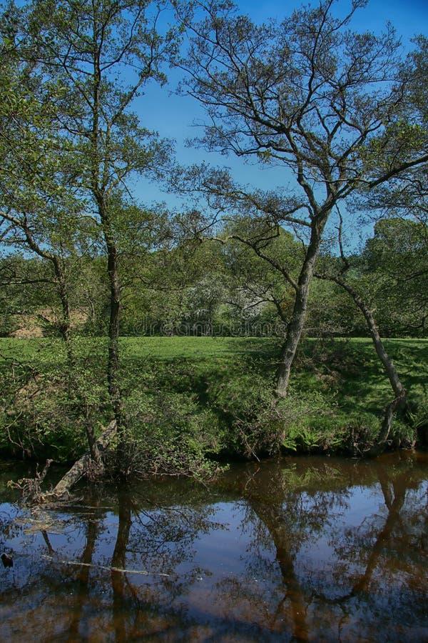 Река Derwent около зеленого цвета ключа, Scarborough, северного Йоркшира стоковые фотографии rf