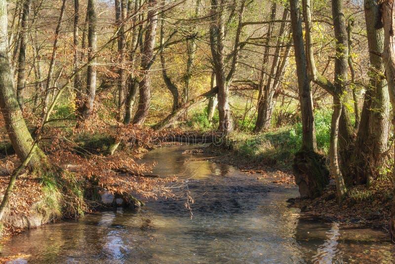 Река Duessel, Neandertal, Германия стоковое изображение