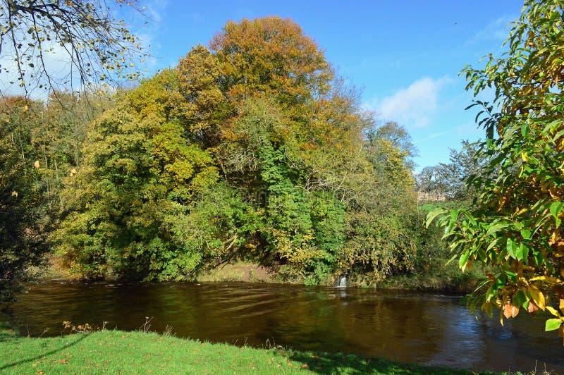 Река Eden внутри Appleby-в-Westmorland стоковые фотографии rf