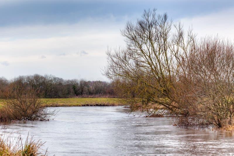 Река Frome на шерстях стоковое изображение
