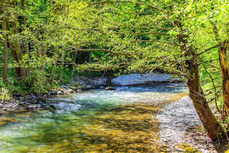Река Gradac ИЗОБРАЖЕНИЯ HDR стоковые фото