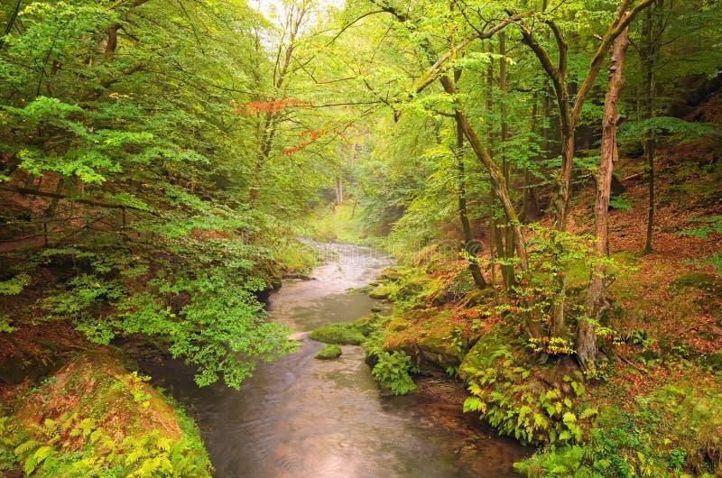 Река Kamenice в утре лета зеленого леса туманном Богемский национальный парк Швейцарии стоковое фото