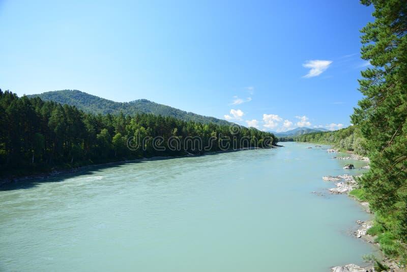 Река Katun в горах Altai в солнечном дне блеска стоковые фотографии rf