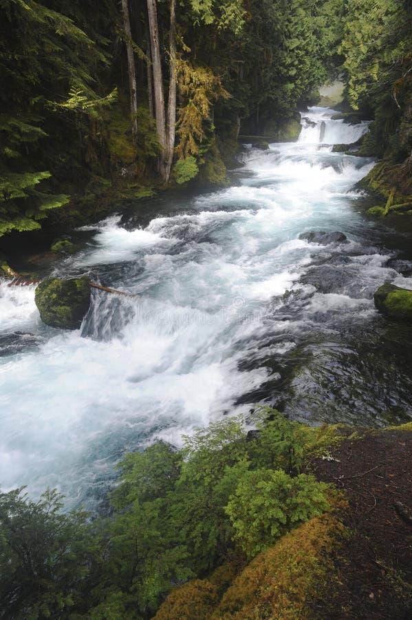 Река McKenzie в сильных потоках гор каскада по потоку от водопада Sahalie стоковые фотографии rf