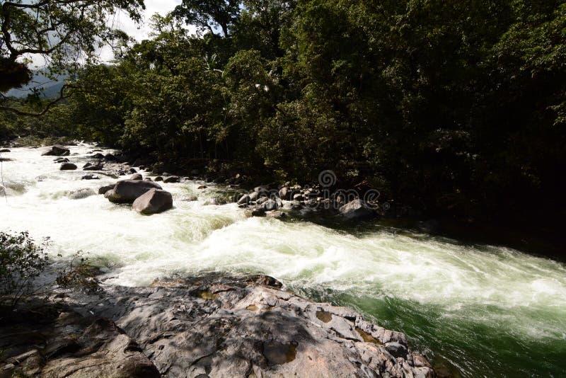 Река Mossman на ущелье Mossman Национальный парк Daintree Квинсленд australites стоковая фотография