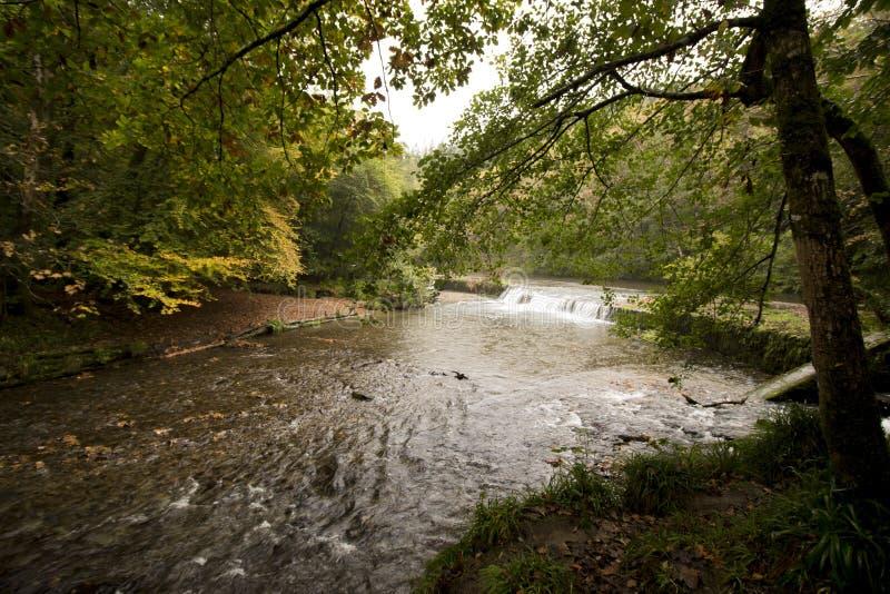 Река Plym, долина Plym, Dartmoor стоковые изображения rf
