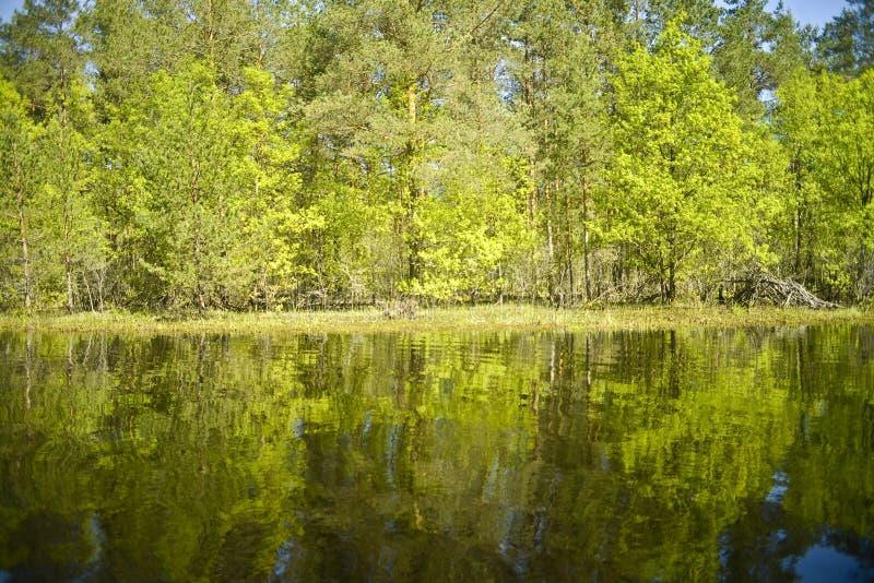 Река Pra Национальный парк Meshchersky Россия стоковые фото