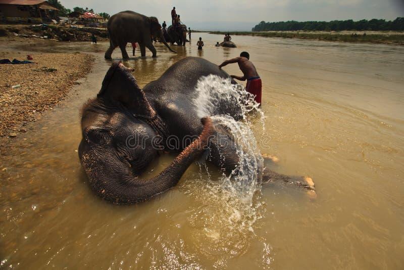 река rinse слона ванны squirts вода стоковые фотографии rf