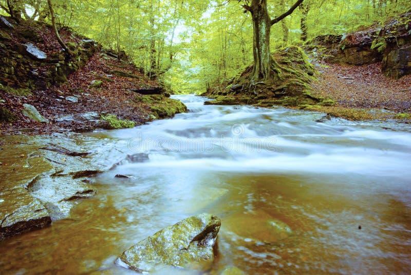 Река Roddlesworth бежать через лес стоковые изображения