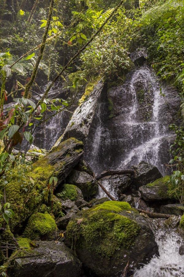 Река Savegre водопада, Сан Gerardo de Dota, Коста-Рика стоковое фото