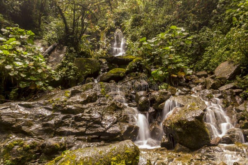 Река Savegre водопада, Сан Gerardo de Dota, Коста-Рика стоковые фотографии rf