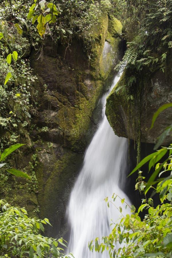 Река Savegre водопада, Сан Gerardo de Dota, Коста-Рика стоковое фото rf
