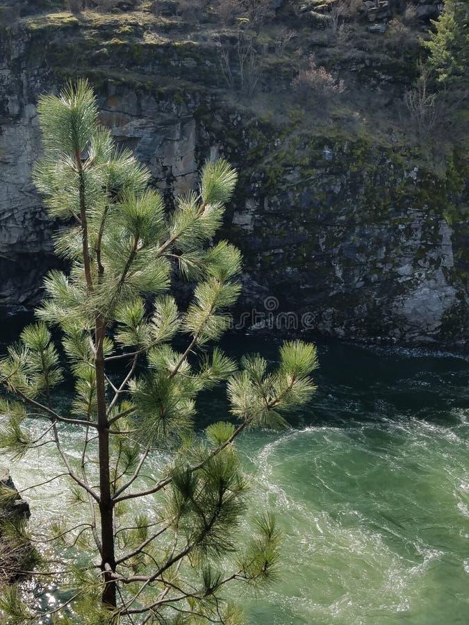 Река Spokane сбивая через каньон утеса стоковое фото