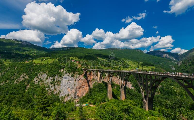 река tara montenegro стоковая фотография