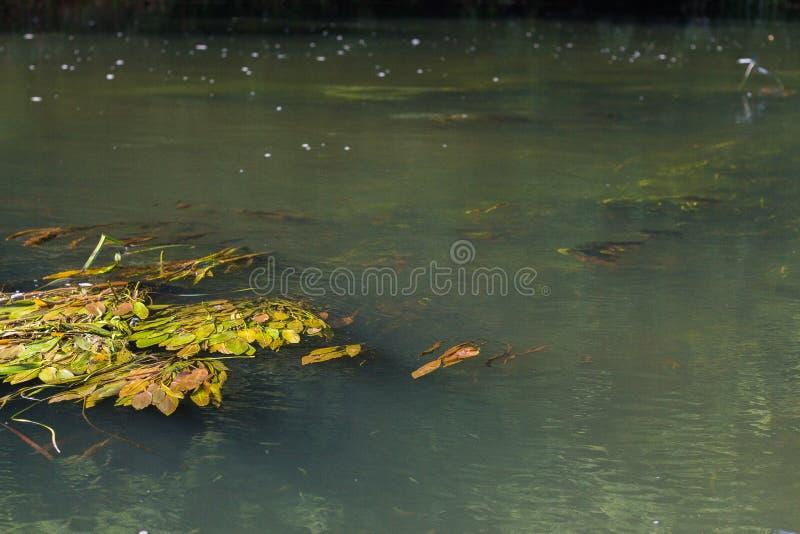 Река Vorona стоковая фотография
