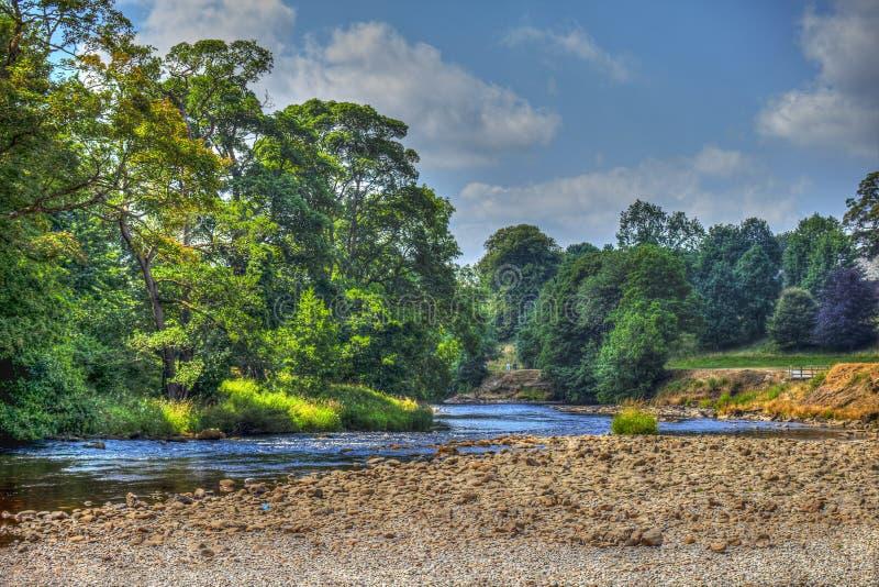 Река Wharfe в участках земли Йоркшира около аббатства Bolton стоковое фото rf