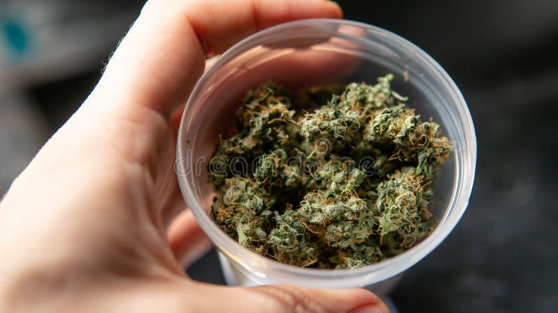 Рекреационное напряжение марихуаны Sativa сбор THC в деталях стоковое изображение