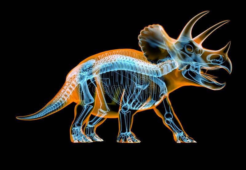 Рентгеновский снимок трицератопса каркасный на черной предпосылке иллюстрация вектора