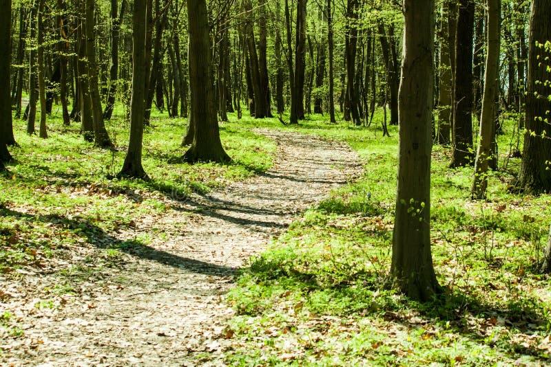 Ретро зеленый лес стоковые фотографии rf