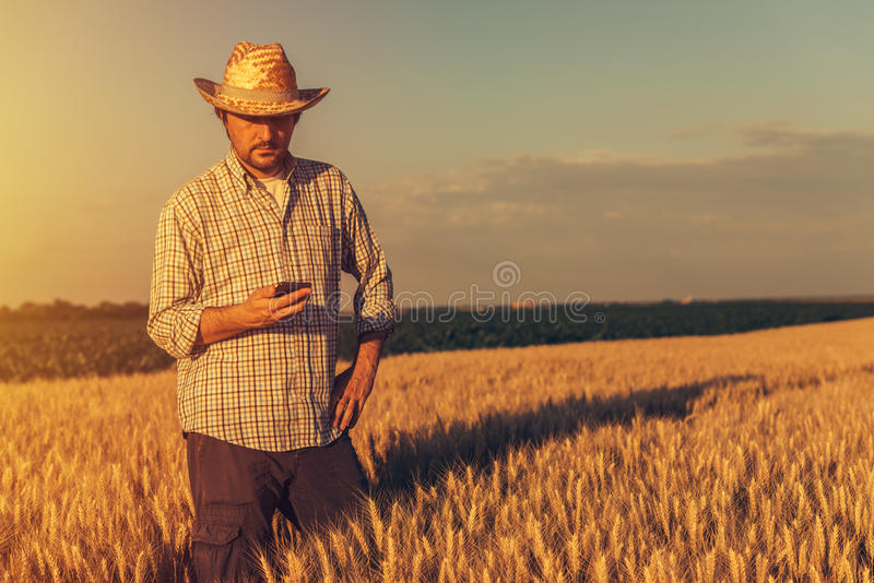 Ретро тонизированное изображение фермера agronomist используя мобильный телефон стоковые фото