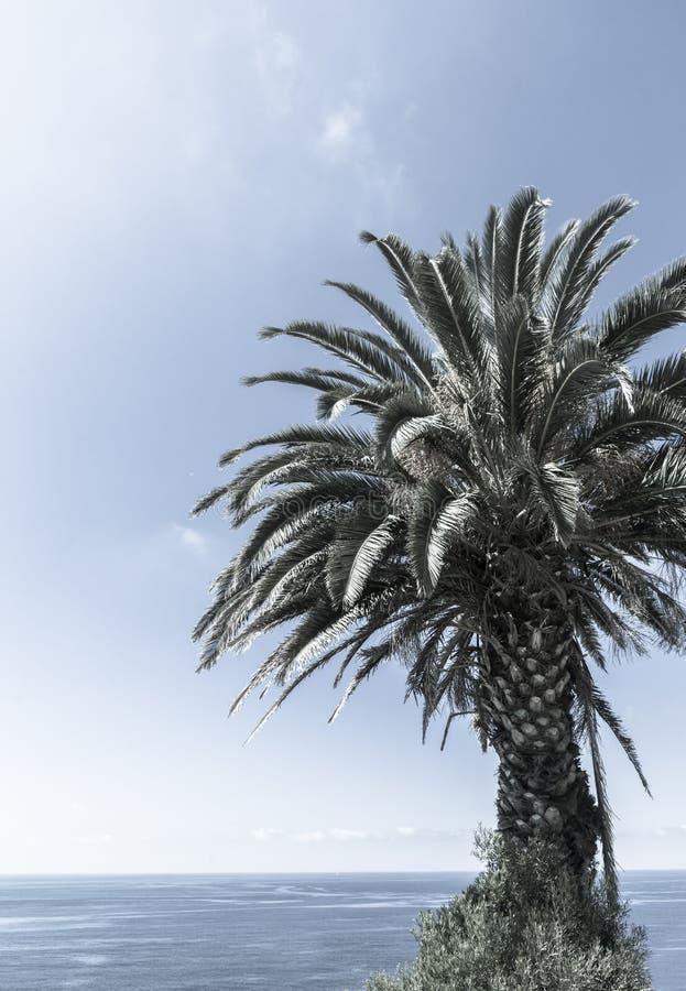 Ретро тропические ладони против голубого неба стоковое фото