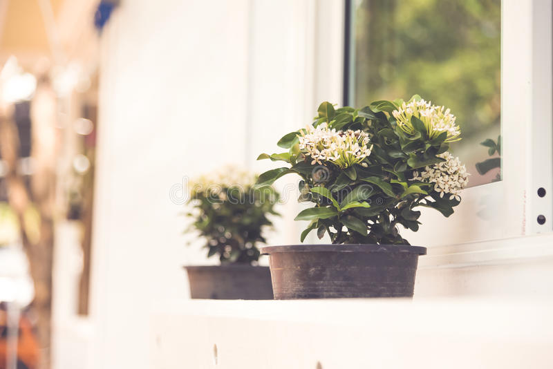 Ретро цветок цвета окнами стоковое изображение rf