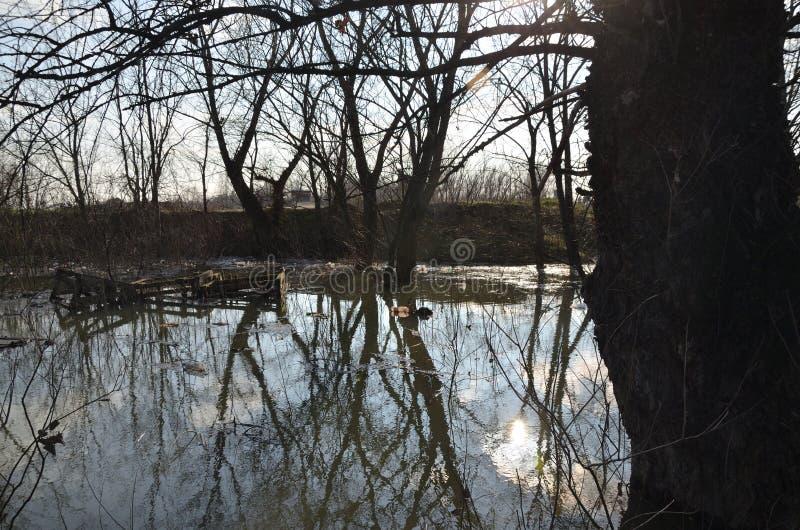 Речная вода в потоке стоковое фото