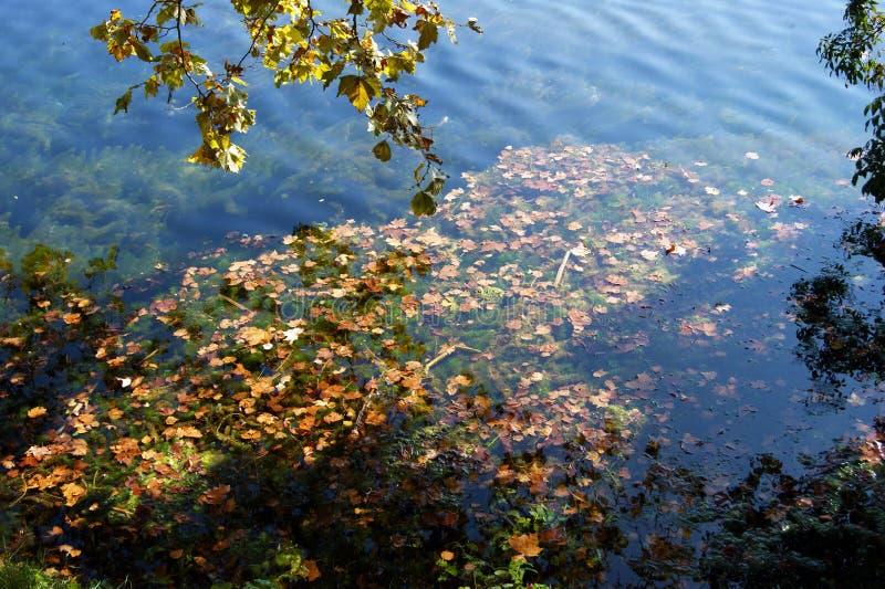 Речная вода в осени стоковое изображение rf