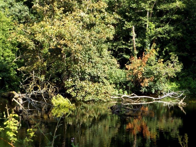 Речной берег с деревьями и отражением воды стоковая фотография rf