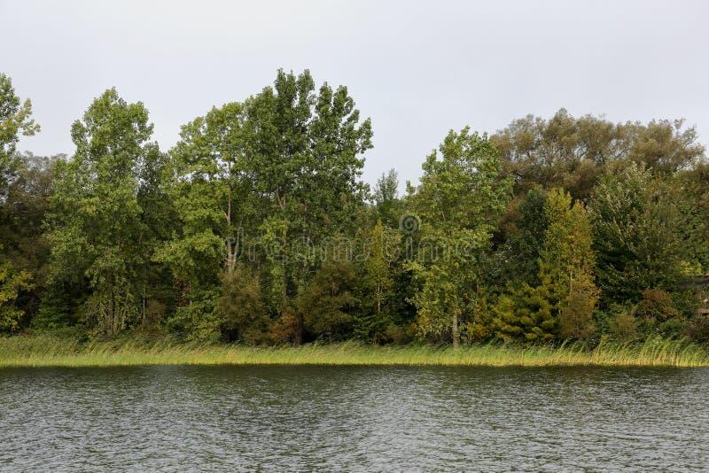 Речной берег с травами и деревьями стоковые изображения