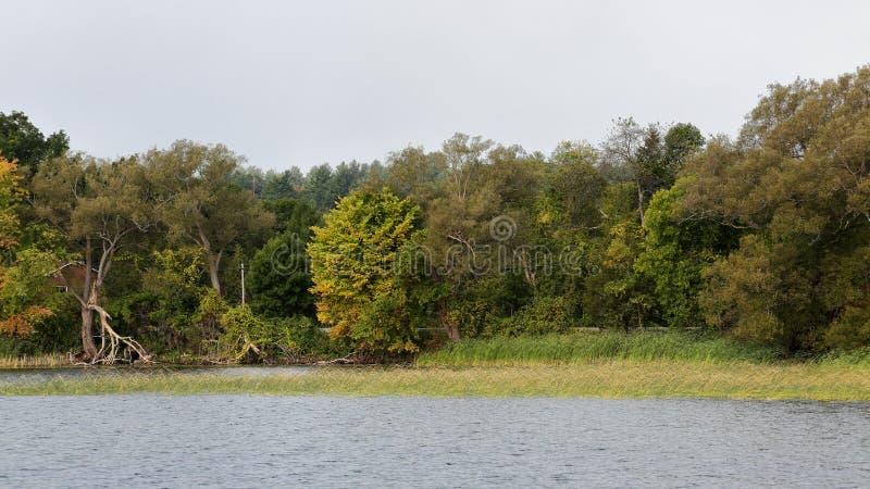 Речной берег с травами и деревьями стоковое изображение