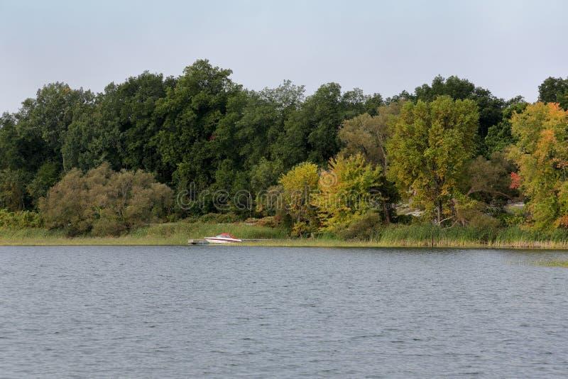 Речной берег с травами и деревьями стоковые фото