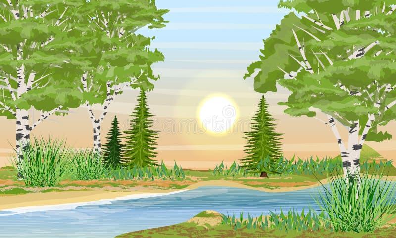 Речной берег с травой, деревьями березы, елями и кустами Заход солнца или восход солнца летом иллюстрация штока