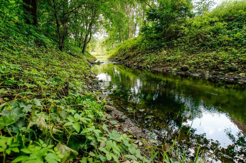 Речные берега в forrest стоковые изображения rf