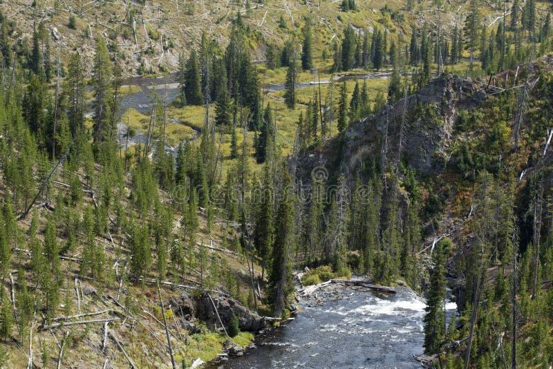 Речные пороги заводи башни и падения, национальный парк Йеллоустона, Вайоминг стоковые фотографии rf