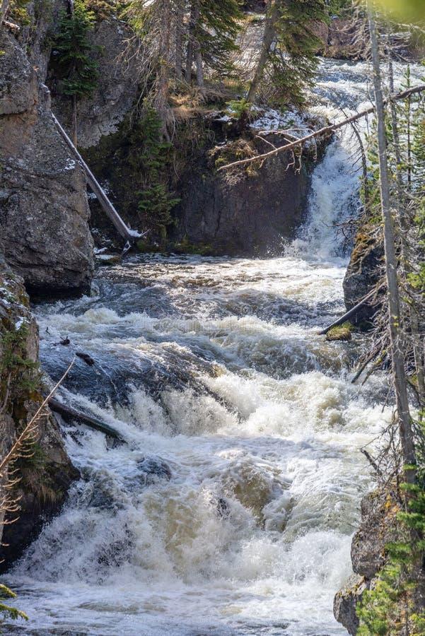 Речные пороги на реке в yellowstone стоковое фото