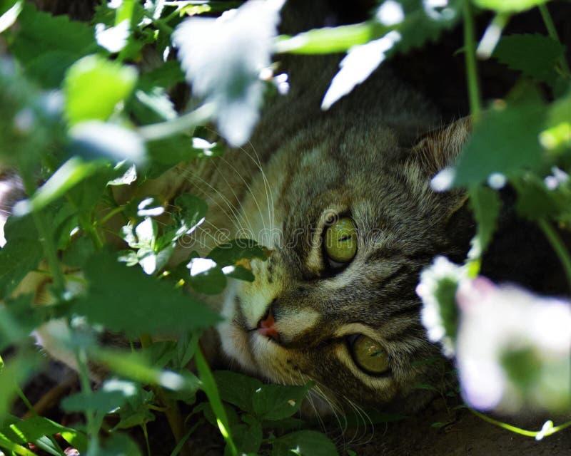 Релаксация кота стоковые изображения