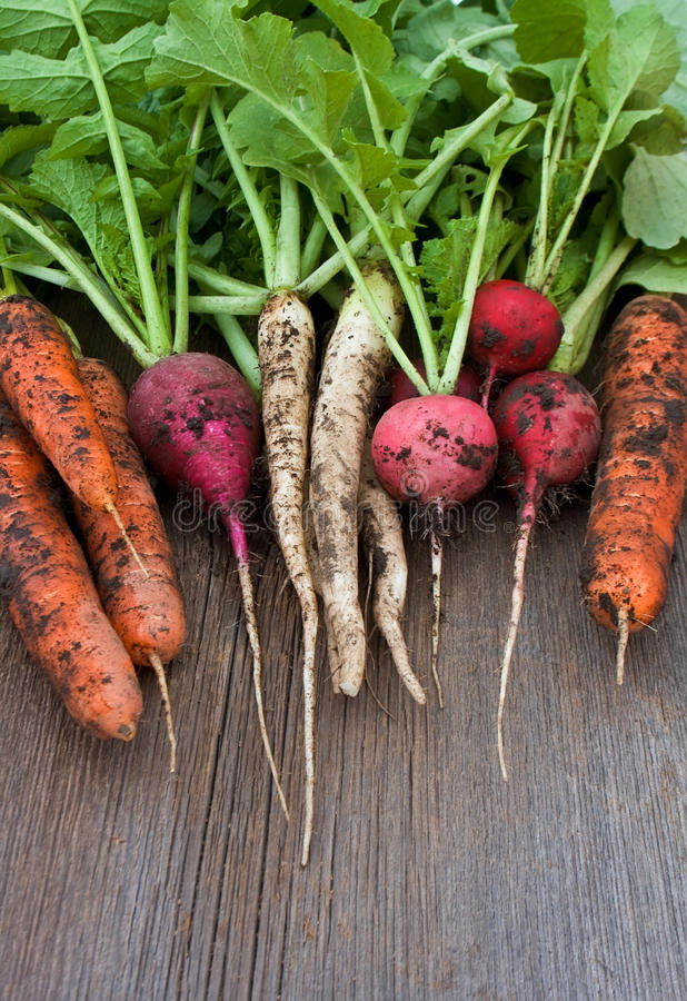 Редиска сада, моркови, daikon с почвой на деревянной предпосылке стоковое фото rf