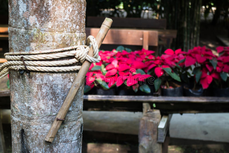 Редкая текстура коры дерева стоковое фото