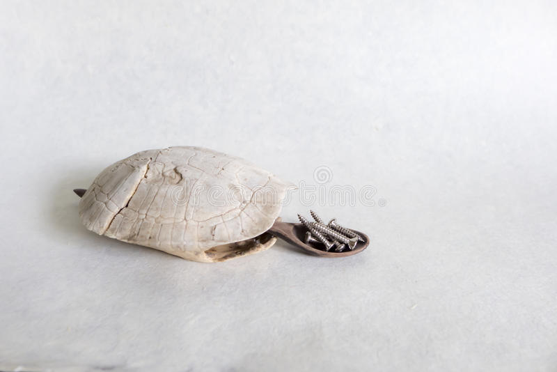 редкая черепаха стоковые изображения rf