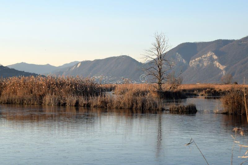 Редкое явление замороженных трясин озера Iseo - Брешия - стоковое фото rf