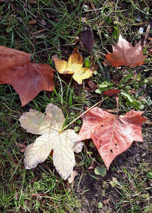 Ржавчина осени выходит падение в траву стоковые фотографии rf