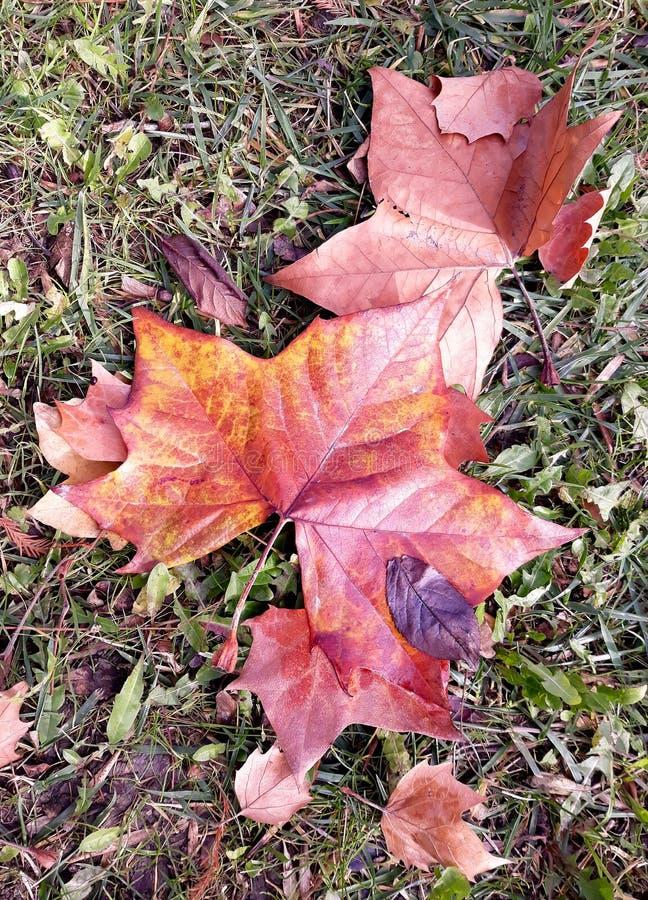 Ржавчина осени выходит падение в траву стоковые фото