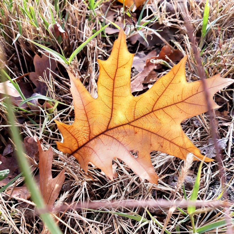 Ржавчина осени выходит падение в траву стоковое фото