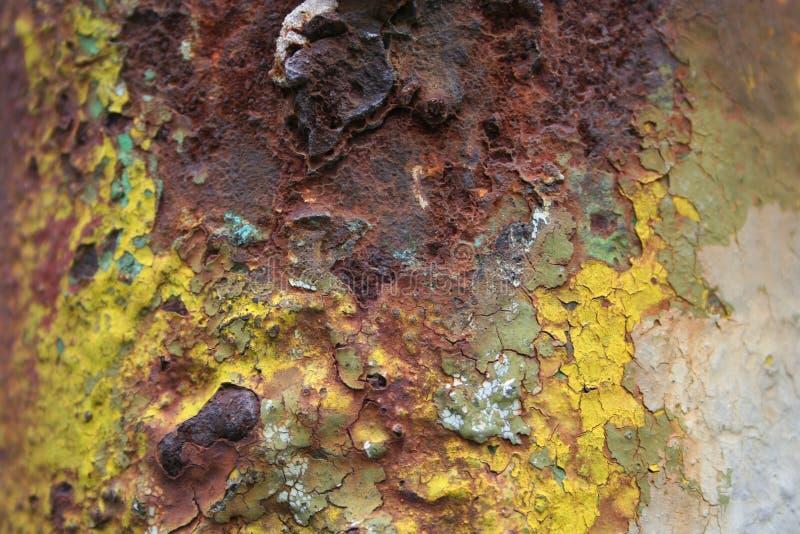 Download ржавчина цветов стоковое фото. изображение насчитывающей цветы - 491386